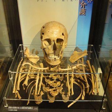 縄文時代の若い女性の人骨