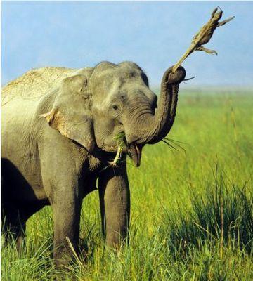 この気の毒なトカゲは、数日間にわたり、ゾウによって持ち歩かれたそうです