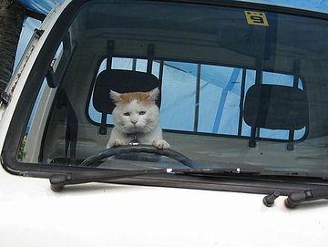 猫も杓子も自動車通勤になるでしょ