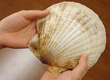 ホタテの貝殻に水を張り、鰹節を入れます