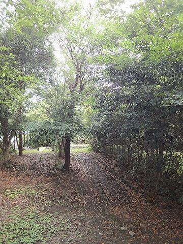 坂の左手の樹林の中