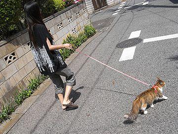 これが猫の散歩