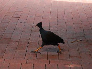 鳥は3歩あゆめば忘れる