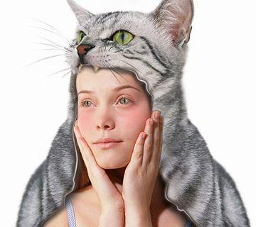 猫をかぶる海苔ピー