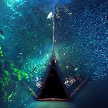 『アクアマリンふくしま』の大水層