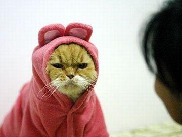 こんな格好をさせられたら、こういう顔にもなるでしょう