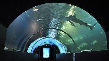 串本海中公園・水族館/水中トンネル