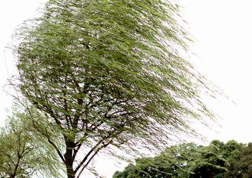 柳の枝みたいに撓って、風を受け流してたのが……