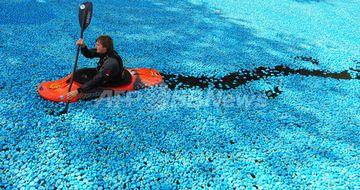 テムズ川を埋め尽くす25万個の青いアヒル。募金集めのイベントだそうです。