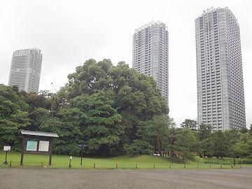 庭園の背後に聳える高層ビル