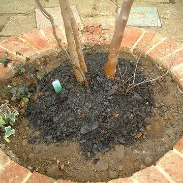 根の上には、厚々と腐葉土をかぶせました