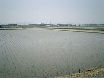 亀田郷の田んぼは、区画整理されてます