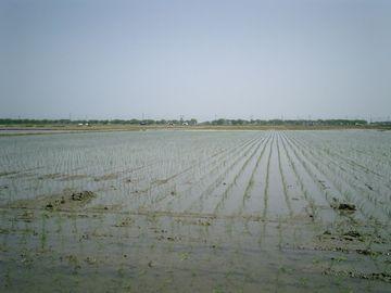 湿地の水を抜くことによって、広大な穀倉地帯が出来たわけだ