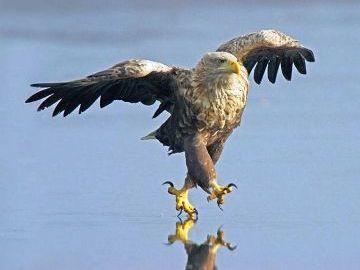 鷹が受粉させるのか?