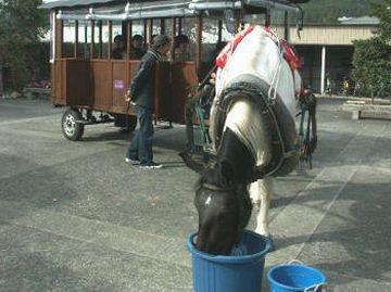 お馬さんは悠然と給油中