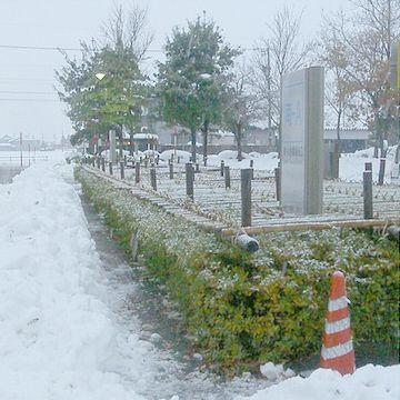 柵で囲う雪囲い