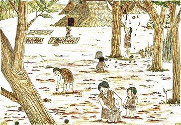 女や子供は、森に入って木の実や山菜を採る
