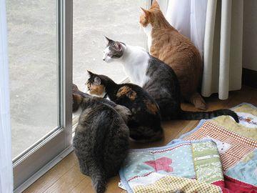 室内飼いの猫たち。外に興味津々。
