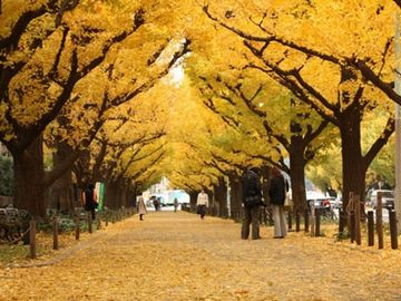街路樹が色づくのも綺麗だし