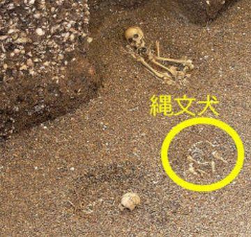 犬の骨は、縄文時代の早期の遺跡からも見つかる