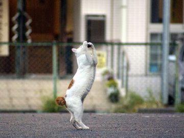 熊本の踊る猫