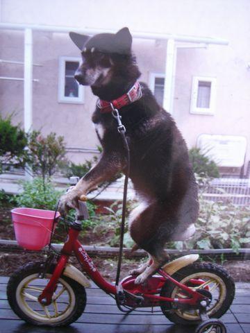 2度めに起こったのは、自転車に乗ってるとき