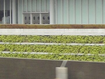 壁面の植栽がいいです