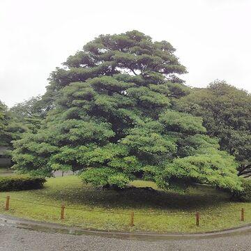 これも別の木みたいです