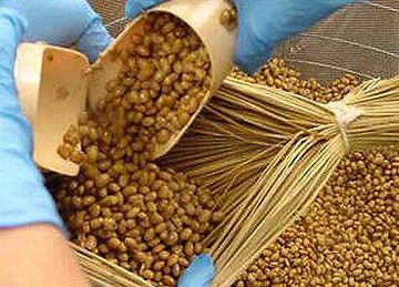 冷まさないままの煮豆を俵に詰めるという、納豆作りが再現されたわけよ