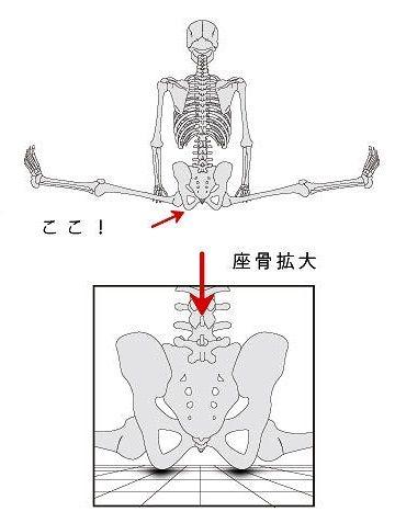 人間の座骨