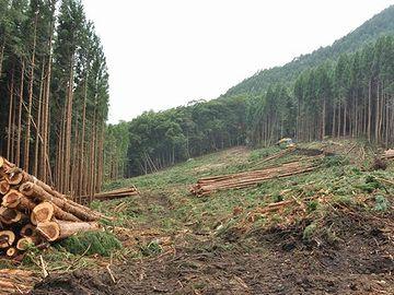 そこだけ、木を伐採したのよ