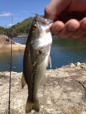 飯詰ダムでの釣りに興じてたんです