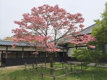 新潟県新発田市の宝光寺