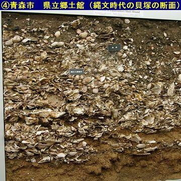 こちらは、明らかなゴミ捨て場の貝塚