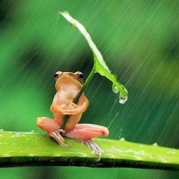雨の日などは、休み