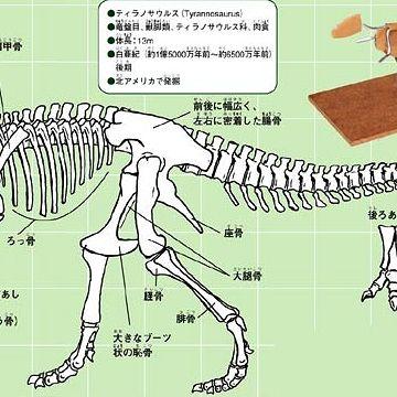 恐竜骨格図