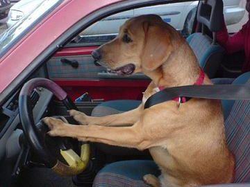 クルマの運転に向いてないんじゃないですか?