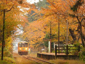 『芦野公園駅』。サクラの紅葉です。