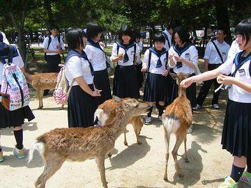 奈良の鹿は、煎餅屋に積んである煎餅は決して狙わず、買った観光客にしか、ねだらないそうです。
