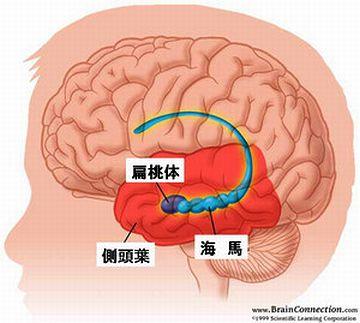 """海の馬って書く""""海馬(かいば)""""って、脳にある器官の名前でもあるのよ"""