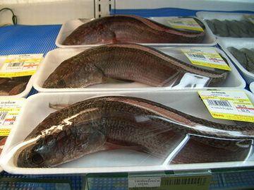 バンコクのスーパーに並ぶ雷魚くん