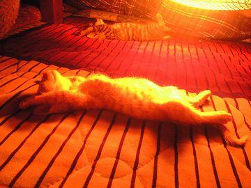 暖房するんなら、小さい空間の方が、ずっと暖かいはず
