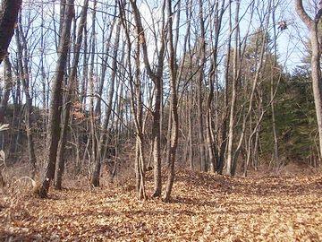 下草の刈られた雑木林では、身を隠す場所もありません