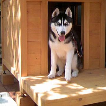 日本で繋がれて飼われてるハスキー犬は、切ないわな