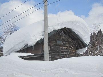 新潟の雪は湿っていて、ひとりでに落ちてはくれません