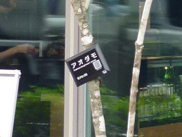 樹名板を確認して、ちょっとびっくり