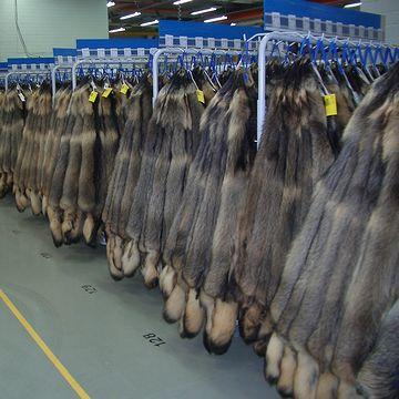 『フィンラクーン』のコート。フィンランドで毛皮用に養殖されてる大狸だそうです。