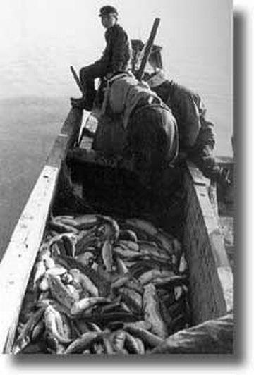 八郎潟・70種類以上の魚介が採れた
