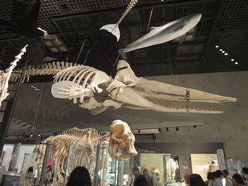 クジラの骨ですかね?