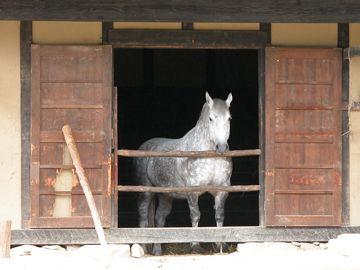 東北地方では、大切な馬を家の中で飼ってた